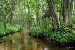 rezerwat Czartowe Pole