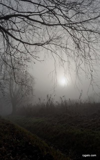 mgła w plenerze
