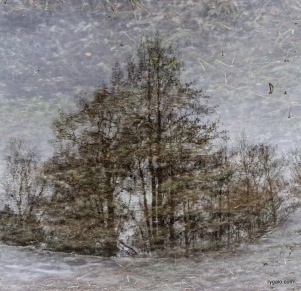 Puddle Effects
