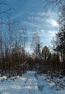 Grabicz zimą