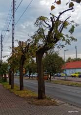 rzeź drzew