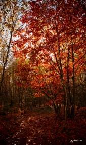 złota polska jesień