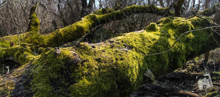 poligon w Zielonce