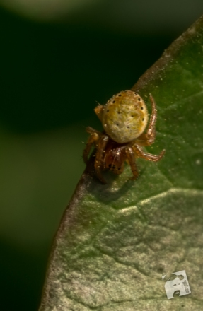 owady-2943