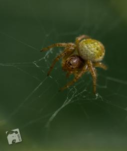 owady-2963
