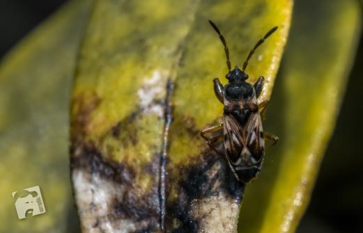 owady-2994