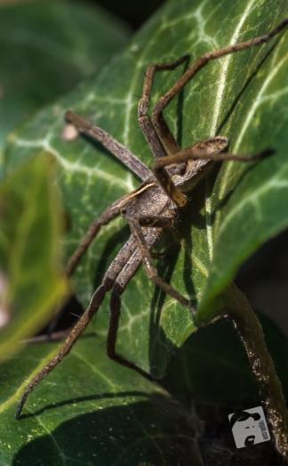 owady-3574