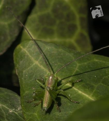 owady-3591