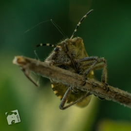 owady-4400