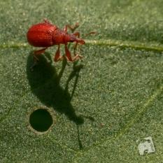 owady-4661
