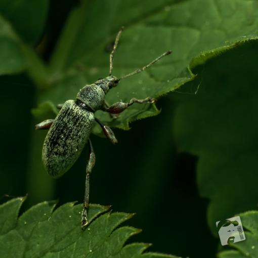 owady-4681