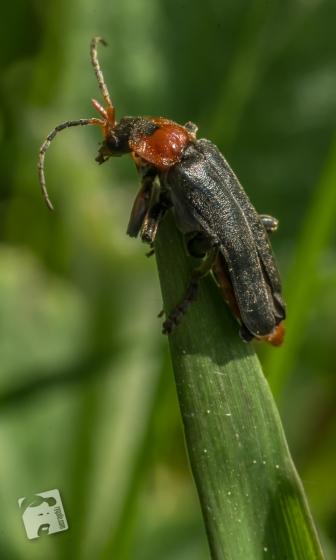 owady-4766