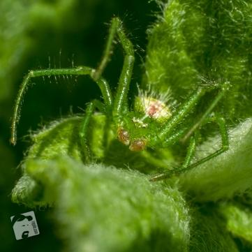 spider-5479