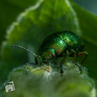 green spider-6046