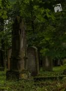 kirkut w Szcztnie-1199