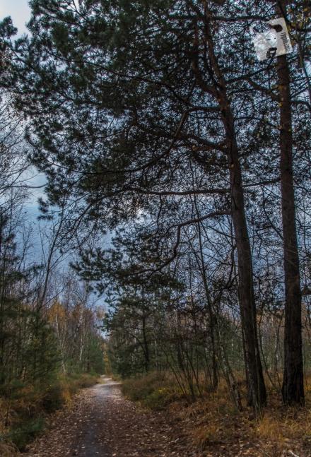 grabicz-jesienia-5069