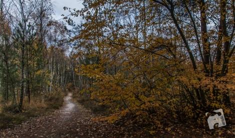 grabicz-jesienia-5074