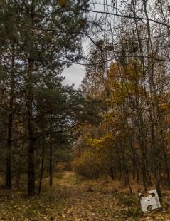 grabicz-jesienia-5085