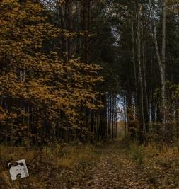 grabicz-jesienia-5103