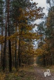 grabicz-jesienia-5119