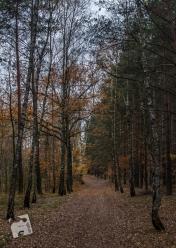 grabicz-jesienia-5121