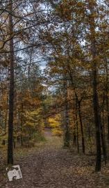grabicz-jesienia-5127