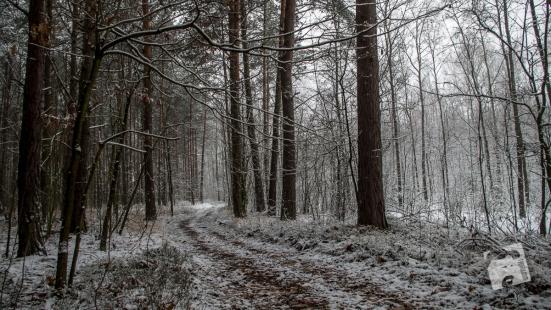 grabicz-zima-1-16