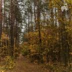 mokra-polska-jesien-1