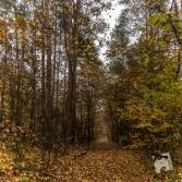 mokra-polska-jesien-3