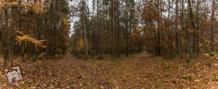 mokra-polska-jesien-4
