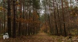 mokra-polska-jesien-5456