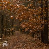 mokra-polska-jesien-5470