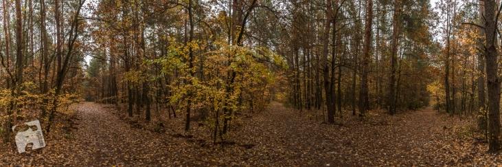 mokra-polska-jesien