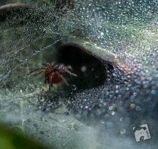 pająk-4271