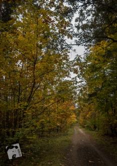 jesień w Grabiczu-8482