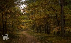 jesień w Grabiczu-8494