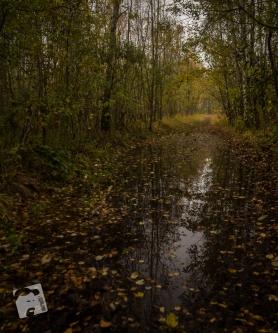 jesień w Grabiczu-8497
