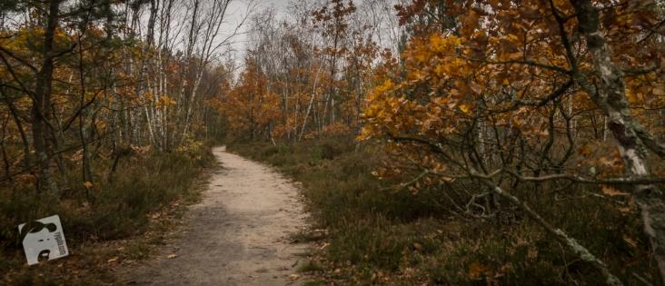 jesień w Grabiczu-8508