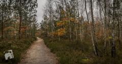 jesień w Grabiczu-8511