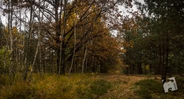 jesień w Grabiczu-8524