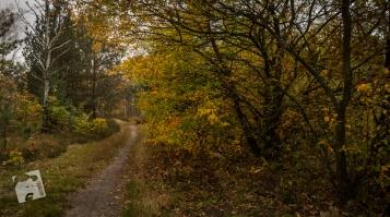 jesień w Grabiczu-8526