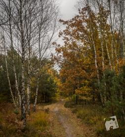 jesień w Grabiczu-8528