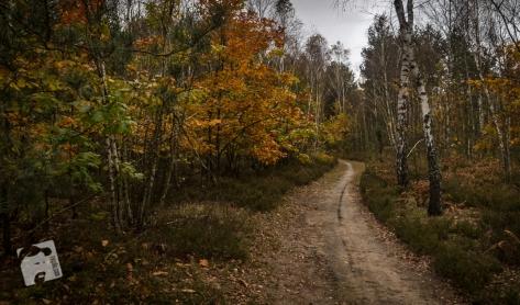 jesień w Grabiczu-8530