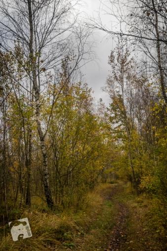 jesień w Grabiczu-8533