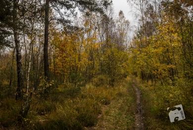 jesień w Grabiczu-8534
