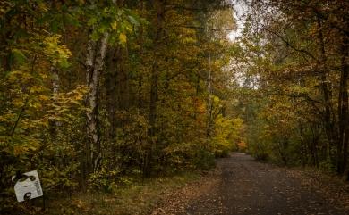 jesień w Grabiczu-8536