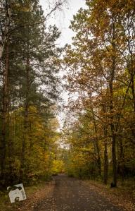 jesień w Grabiczu-8537