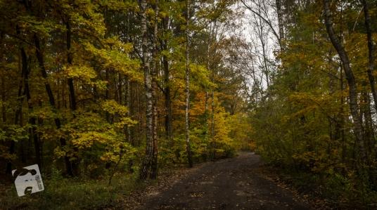 jesień w Grabiczu-8538