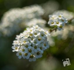 wiosenne macro-0326
