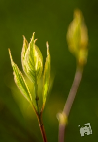 wiosenne macro-0331